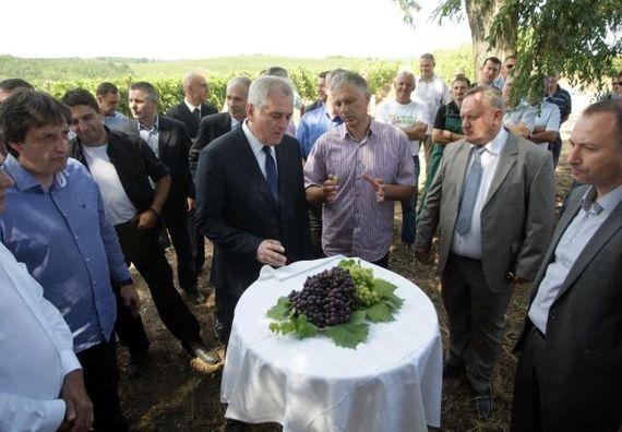 Barvarin 31.8.2013. god. – Predsednik Nikolić u obilasku Rubinovih vinograda.